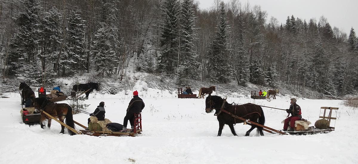 7 ekvipasjer legger ut på en prøvetur for å trene sikkerhetsavstand og se hvordan hestene går i kolonne. Foto: K. Bogsti