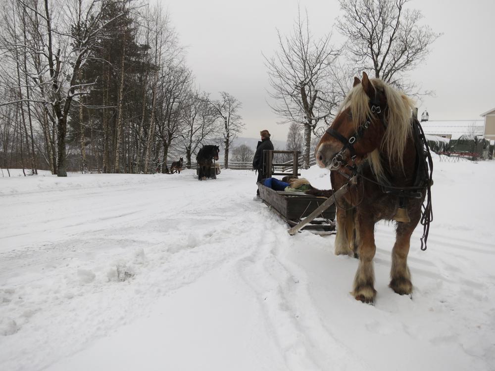 God trening for gamper og kjøre opp bakkene fra Sørli til Høsbjør der kjøreprøva skulle avlegges. Foto: Karine Bogsti