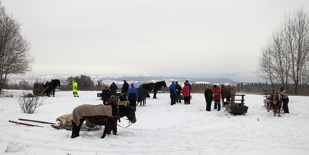 Hester i ferd med spennes ut, og seletøy, bitt, tømmer og ikke minst hesten sjøl sjekkes av Sagstuen. Det er også en test å se hvor rolige de står. Foto: Karine Bogsti