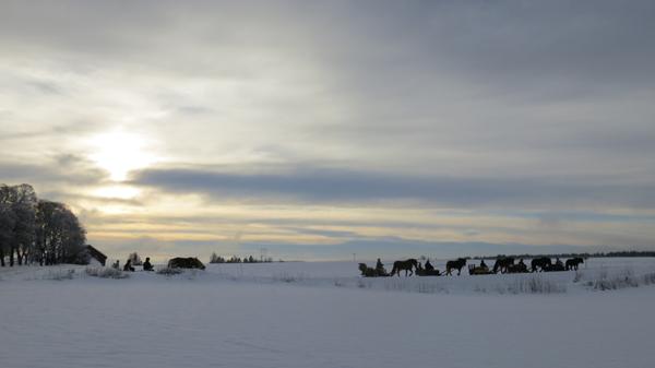 Ikke elg, men lasskjøring i solnedgang. Her ved Frøberg i Furnes. Foto; Karine Bogsti