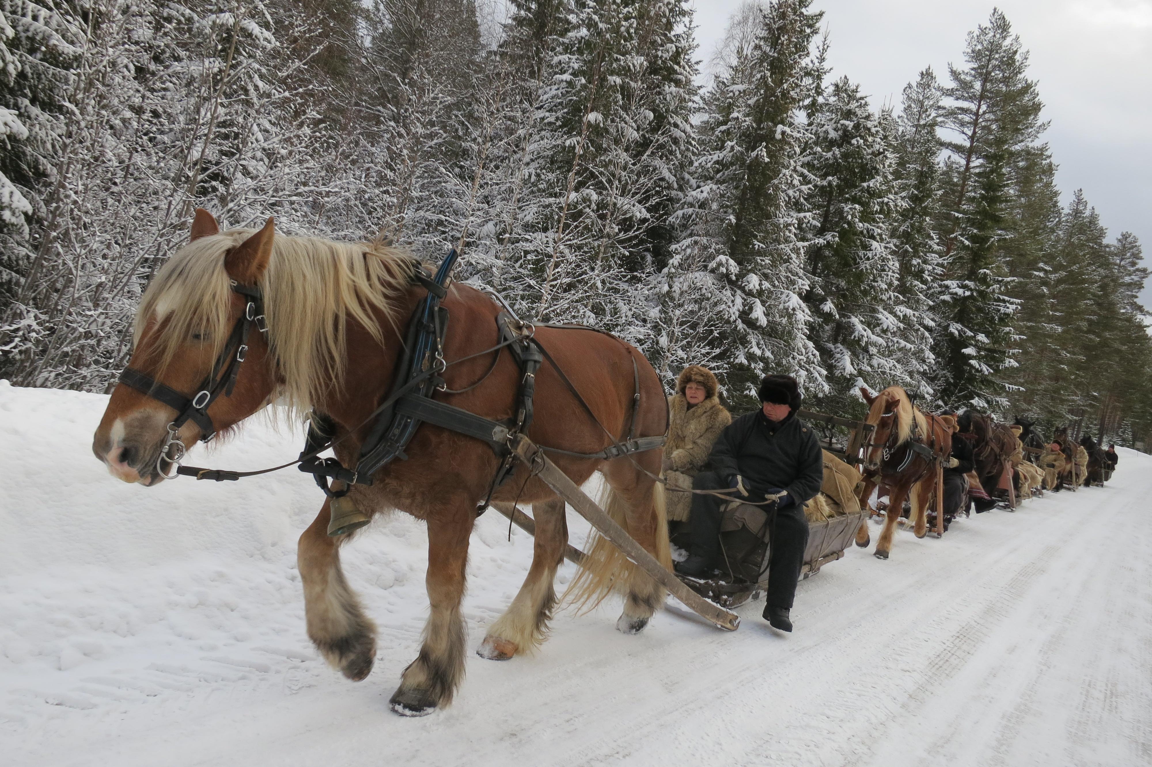 6 hester og 12 lasskjørere på tur i dag. Foto: Karine Bogsti