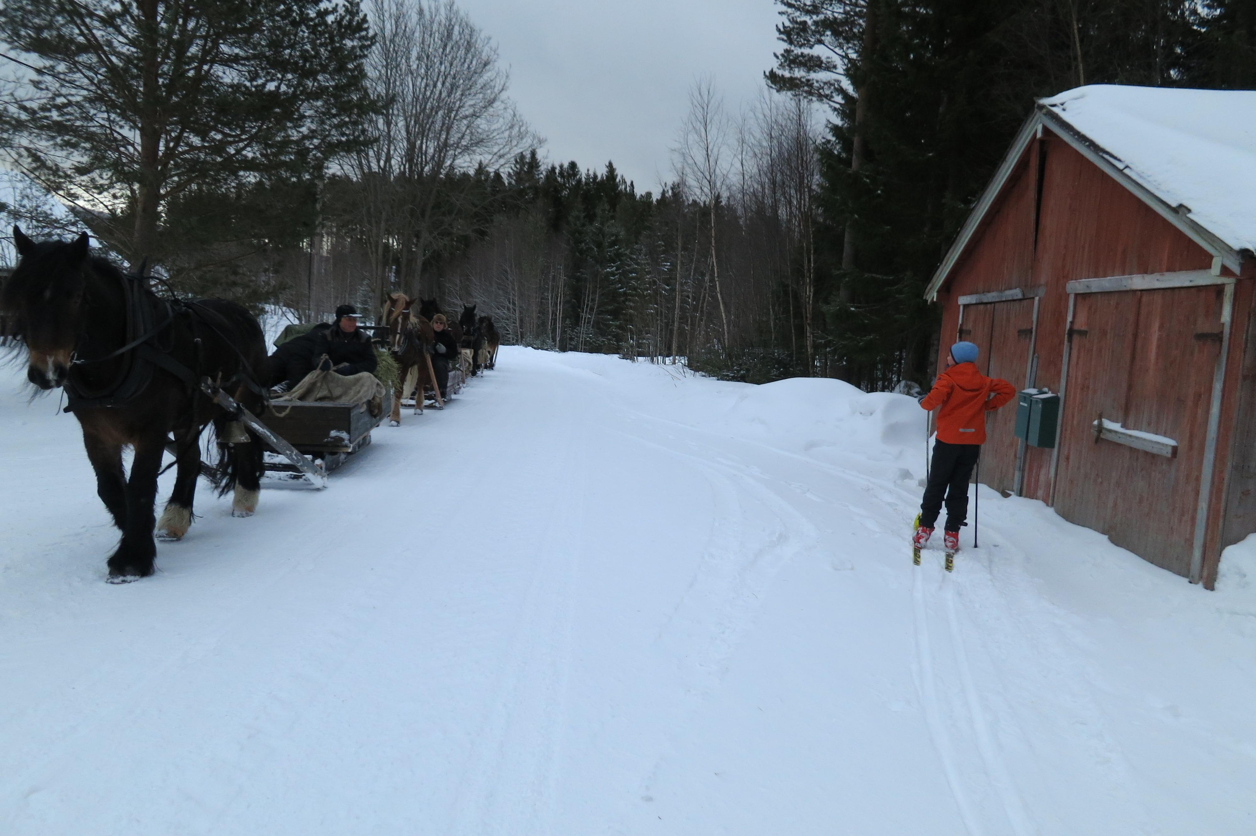 Noen bruker ski, andre bruker slede. Foto: Karine Bogsti