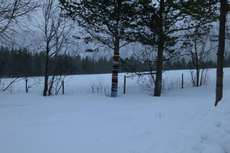 Dette treet fryser ikke. Foto: Karine Bogsti