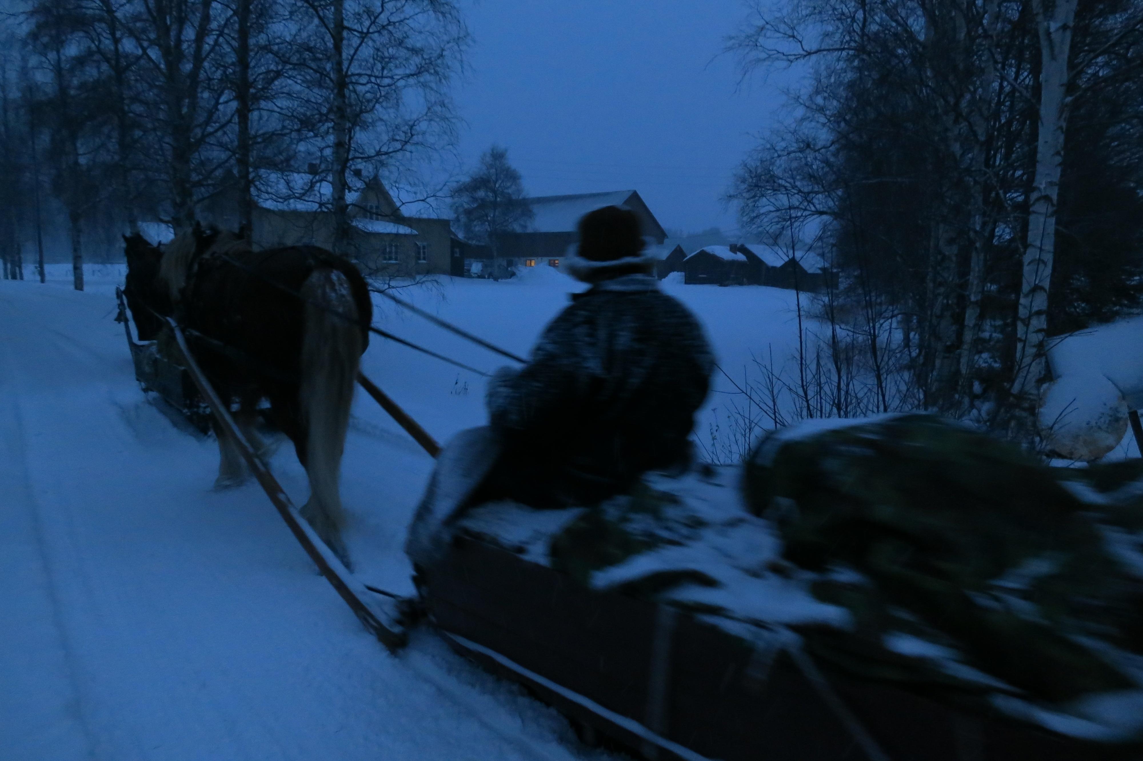 Godt å komme fram til fjøset på Skarsno på Alvdal, der vi hesta stalles opp for natta, nok en gang hos gjestfritt vertskap. Sjøl bor lasskjørerer med kvite laken denne natta- luksus (på Tavernaen). Foto: Karine Bogsti