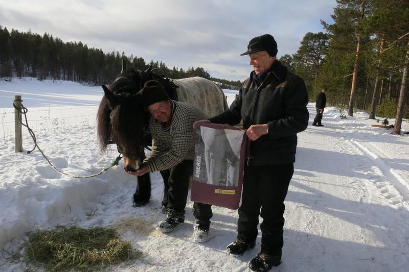 Ekte hestekrefter går på vatn, høy og sjølsagt kraftfôr fra Felleskjøpet. Romedalsprinsen gis ekstra energi fra Truls og Emil. Foto: Karine Bogsti