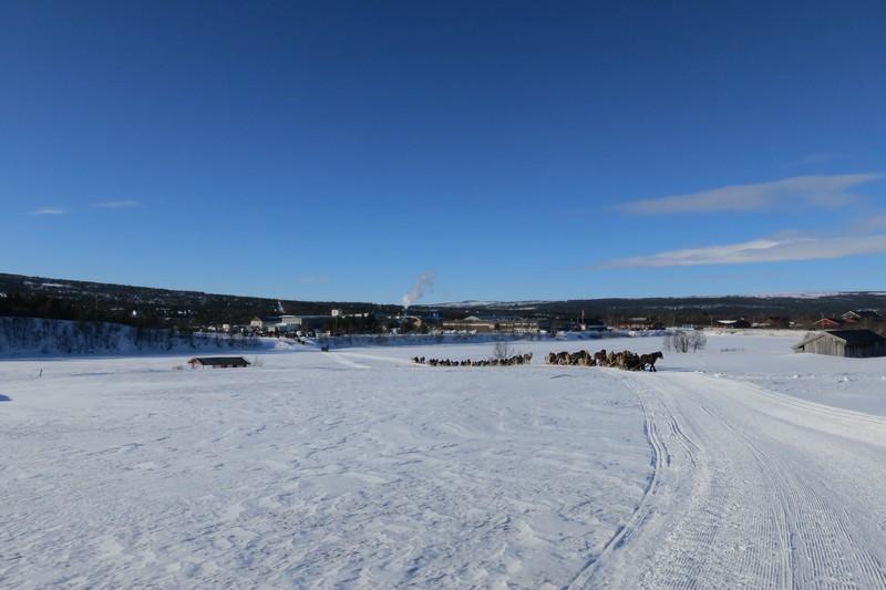 Laaaang rekke med lasskjørere på veg til innkjøring og start på Rørosmartnan. Totalt er det rundt 90 hester og 220 lasskjørere som kjører inn på marten. Foto: Karine Bogsti