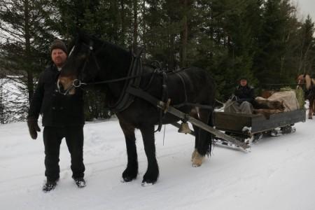 Hesten Romedalsprinsen med kusk Truls Mathisen fra Romedal, og hjelpekusk Emil Bryn fra Romedal. Legg merke til at de har to bukker under på sleden sin.Foto: Karine Bogsti
