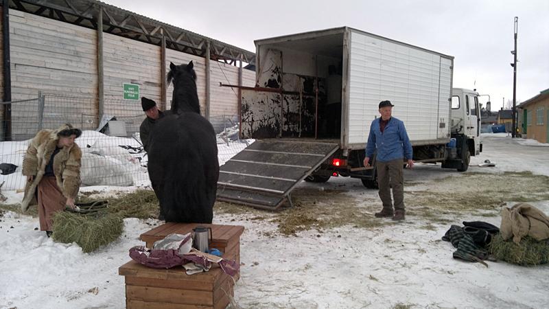 Hestene leies inn på bil for turen hjem til Hedmarken etter endt tur til Røros. Foto: Karine Bogsti