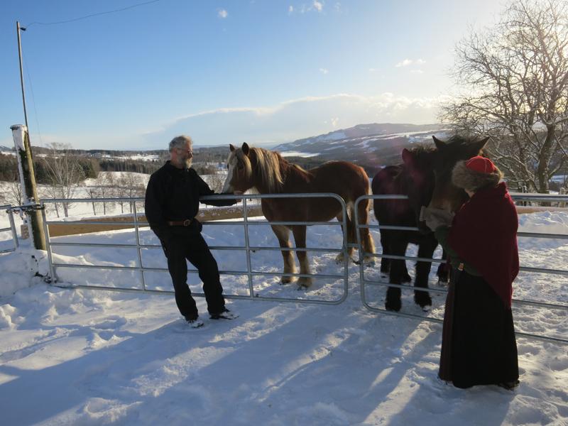 Hesta på Båberg har det fint hjemme, men nå skal Brennsæterjinta (t.v.) få være med eier Jørgen Hveem og stangessokning Eli Lang-Ree på tur. Foto: Karine Bogsti