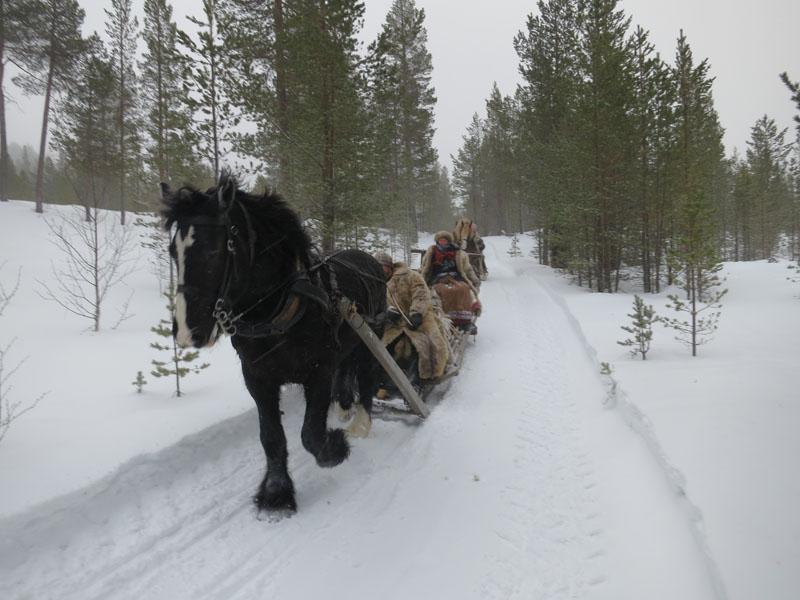 Hesten Guri i farta ned en bakke. Foto: Karine Bogsti