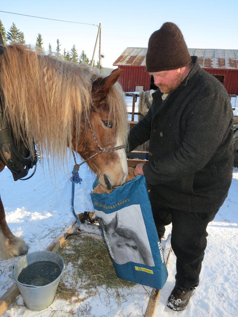 - Har du igjen noe mer i posen, Truls? Hesten Brennsæterjinta liker kraftfôret fra Felleskjøpet. Foto: Karine Bogsti