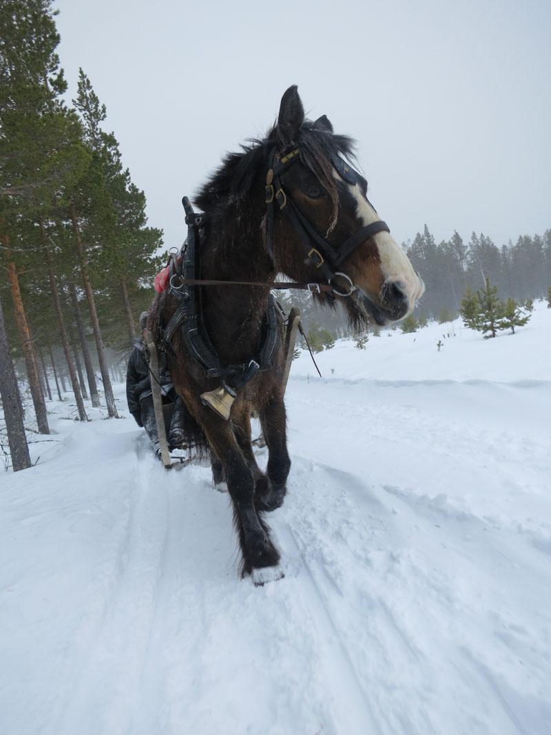 Nå er hesten Dokka også med i følget. Foto: Karine Bogsti