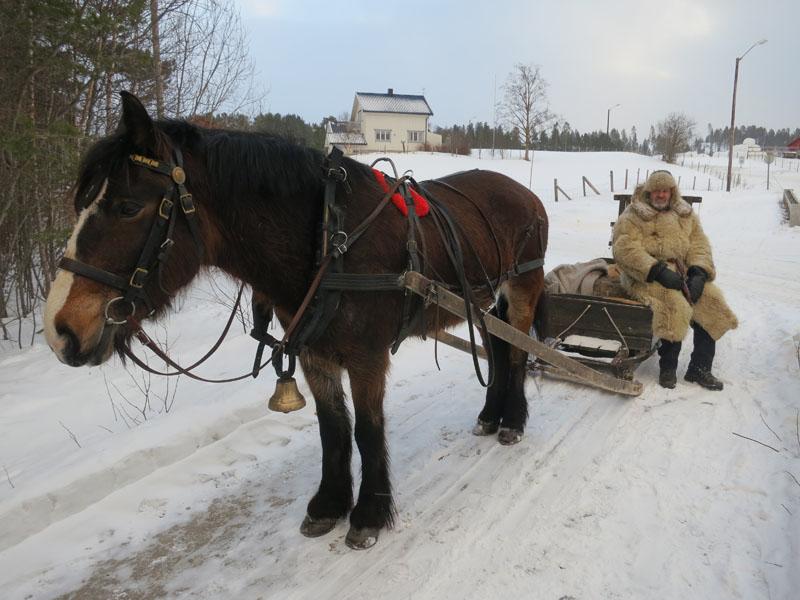 Dokka som Nils Dahlen eier, her med Hans Lahlum som kusk. Foto: Karine Bogsti