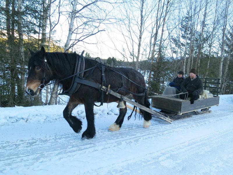 Hesten Romedalsprinsen, med Truls Mathisen som eier og kusk og Emil Bryn som hjelpekusk. Foto: Karine Bogsti