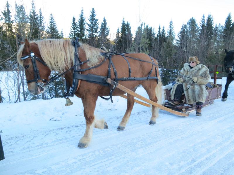 Hesten Smukken med eier og kusk Kjell Ivar Stensli. Foto: Karine Bogsti