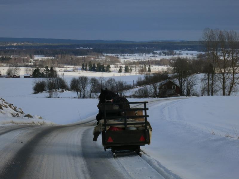 Hesten Romedalsprinsen og romedølen Emil skuer så endelig Romedal. Foto: Karine Bogsti