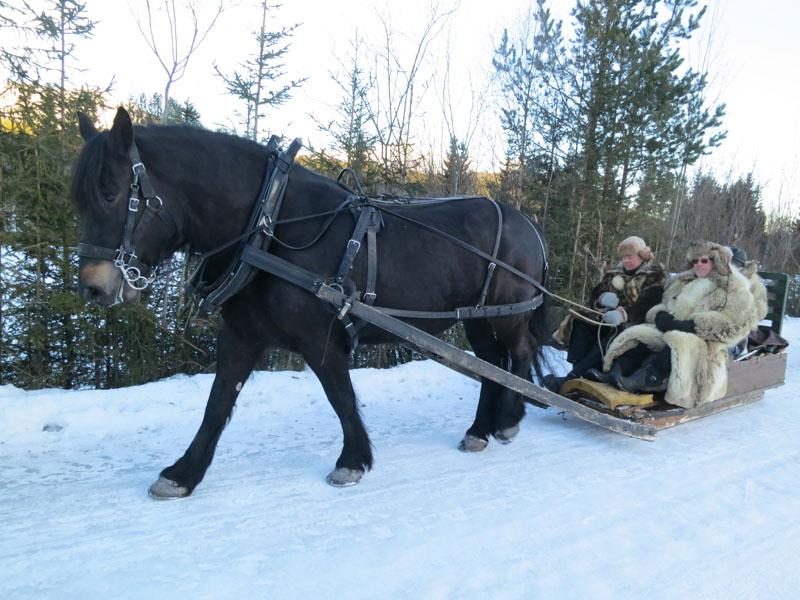 Hesten Molly som Erik Flagstad eier. Her med Kjell Aage Øie-Kjølstad og Mikkel Dobloug som hjelpekusker. Foto: Karine Bogsti