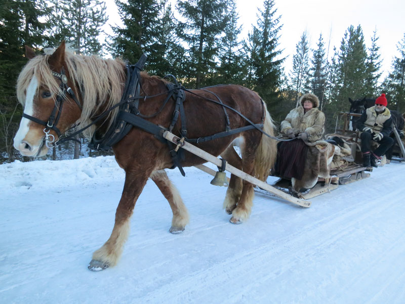 Hesten Brennsæterjinta som Jørgen Hveem eier, og hjelpekusk er Eli Lang-Ree. Foto: Karine Bogsti