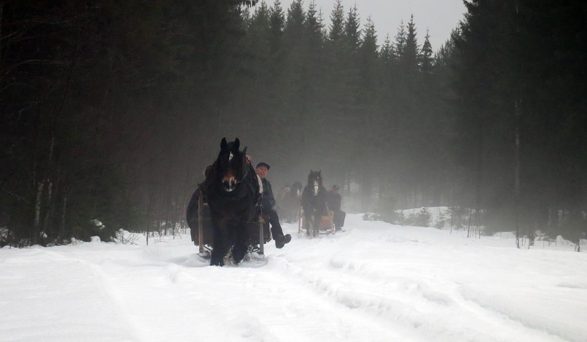 Tåkedis. Foto: Karine Bogsti