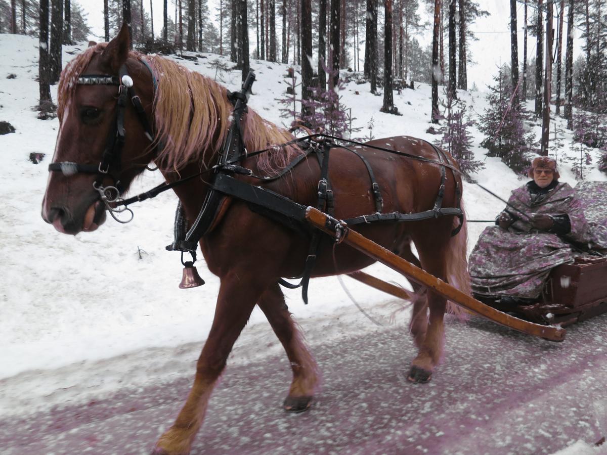 En lasskjører og hest til ble med fra Rena; Kjell Ivar Stensli og hesten Smukken. Foto: Karine Bogsti