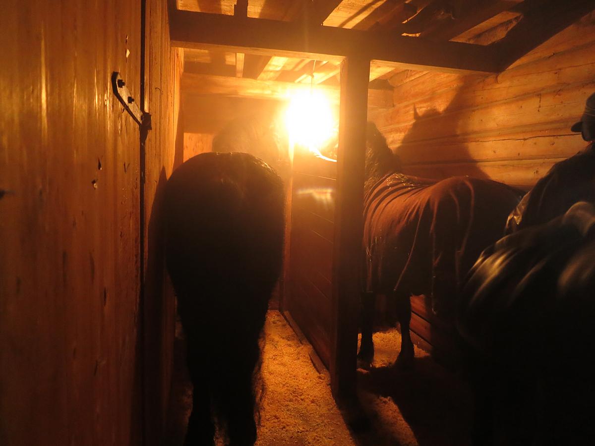 Godt for hester å få hvile i stall etter en lang dag på vegen. Foto: Karine Bogsti