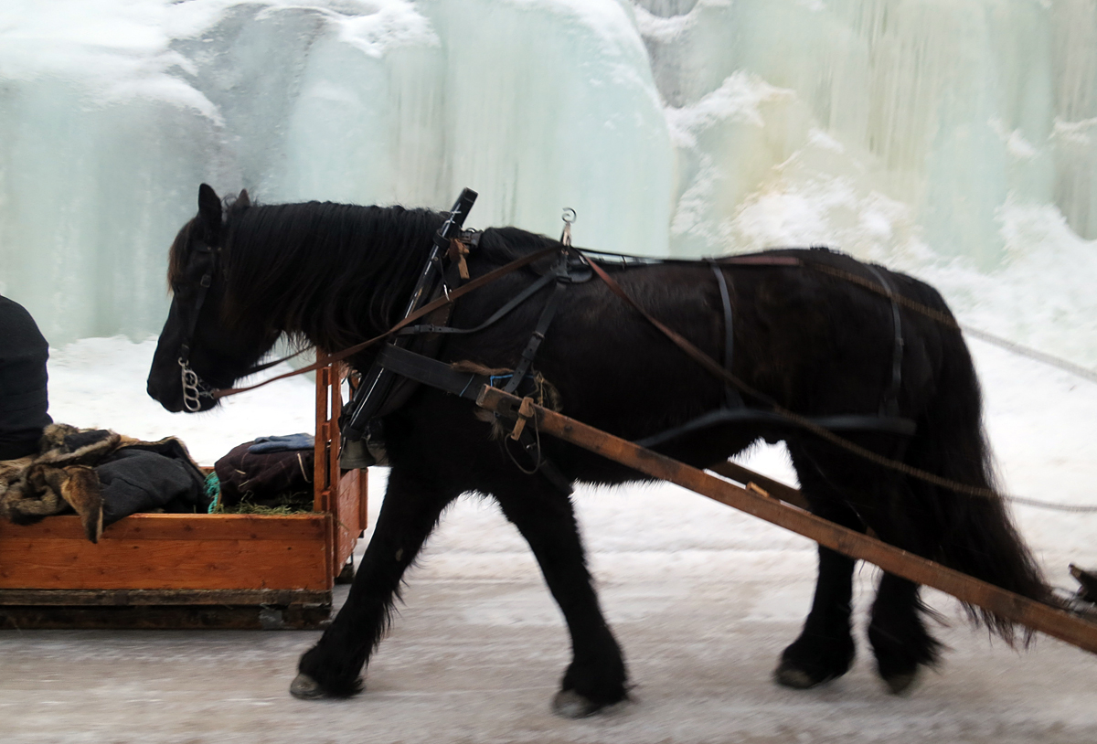 Hest mot isfall. Foto: Karine Bogsti