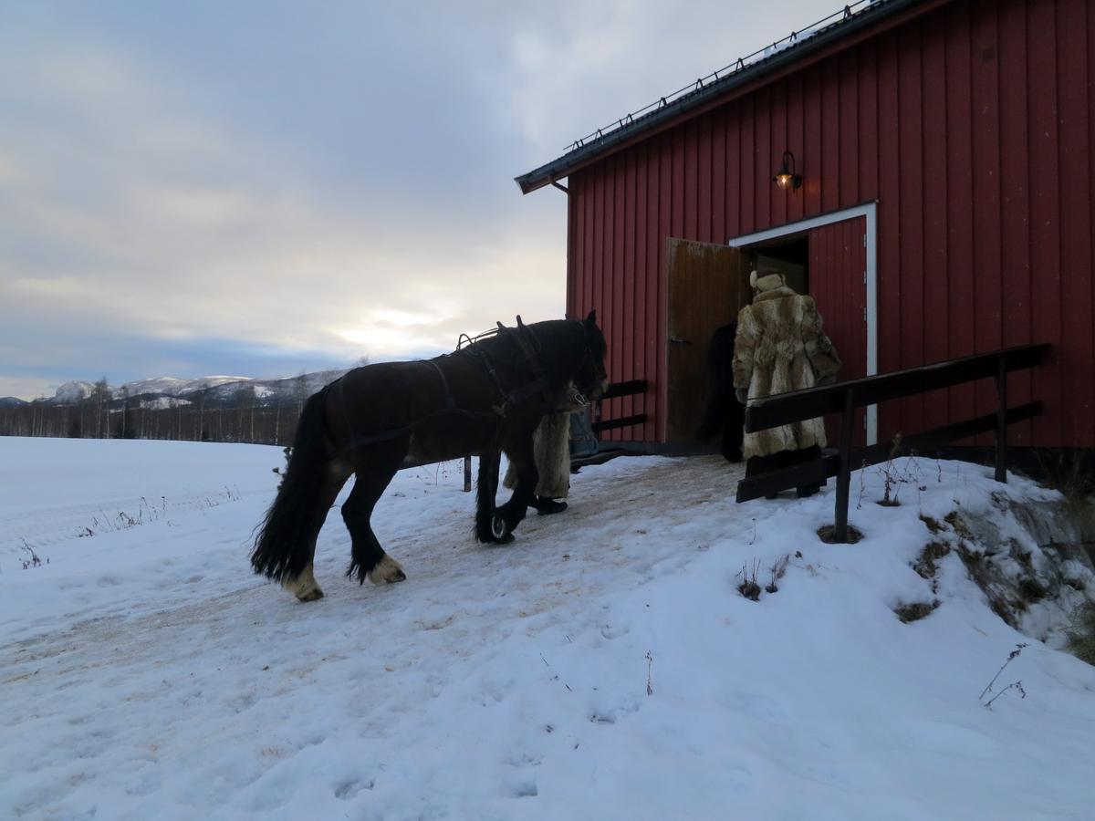 Hesta settes inn i stallen for kvelden, og skal få ei god lang natts hvile i fin stall. Foto: Karine Bogsti