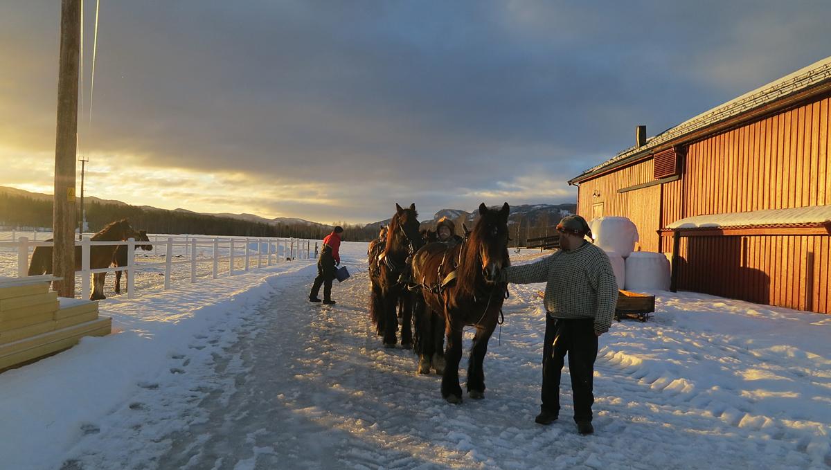 Lang rekke ut fra stallen. Første morgen på turen med solskinn fra morgenen av. Foto: Karine Bogsti