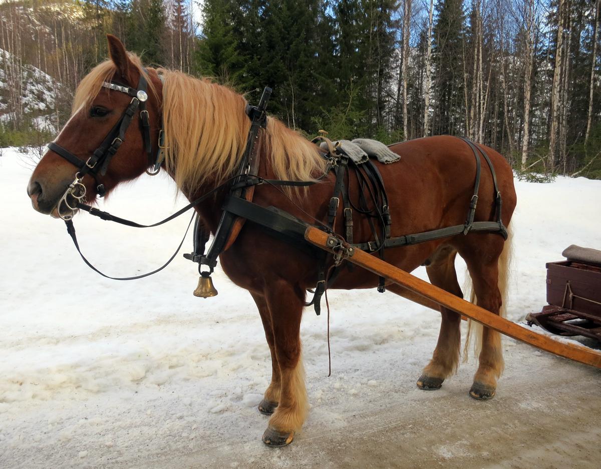Hesten Smukken som Kjell Ivar Stensli eier. Foto: Karine Bogsti