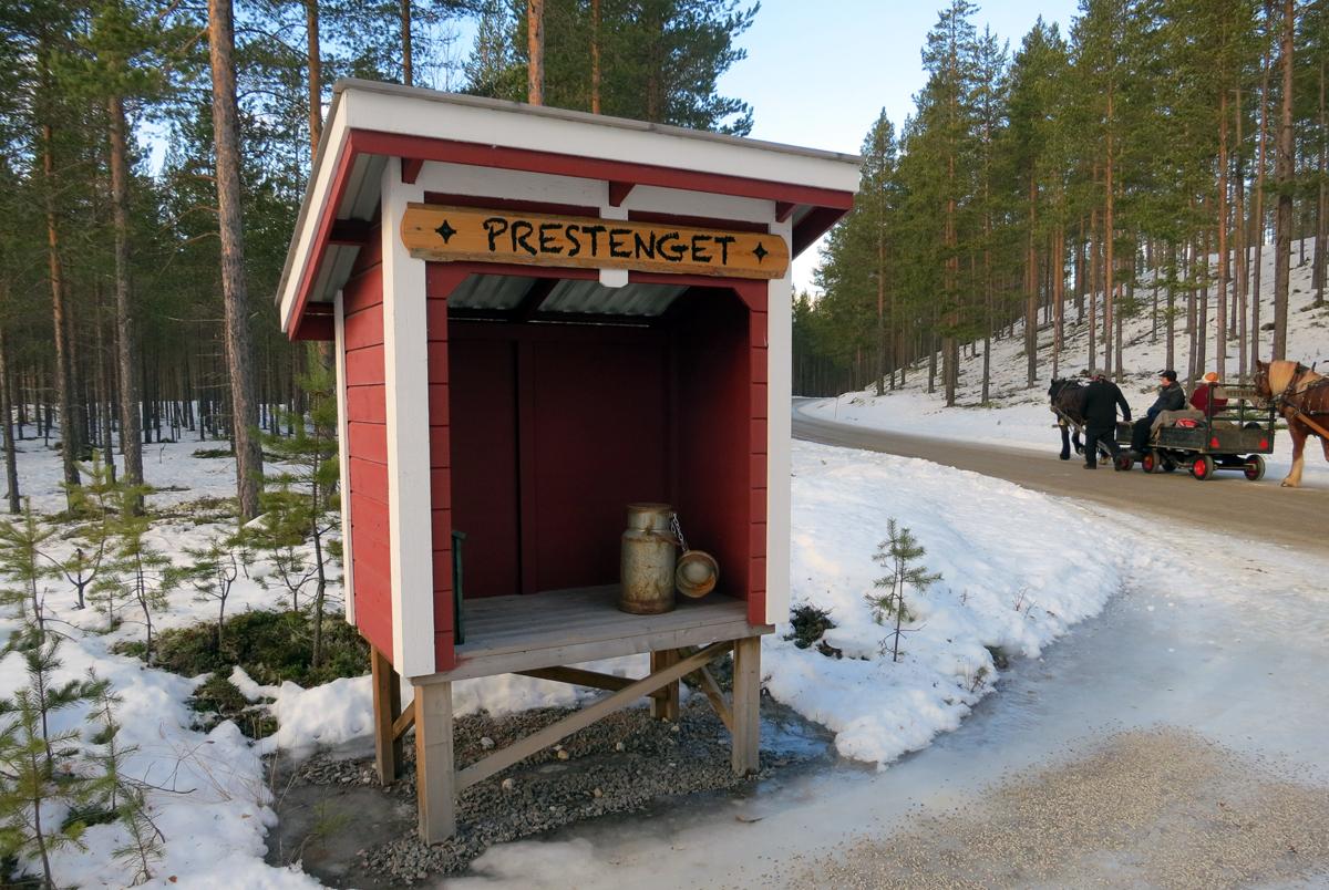 Artig å møte ei skikkelig melkerampe på vår ferd. Foto: Karine Bogsti