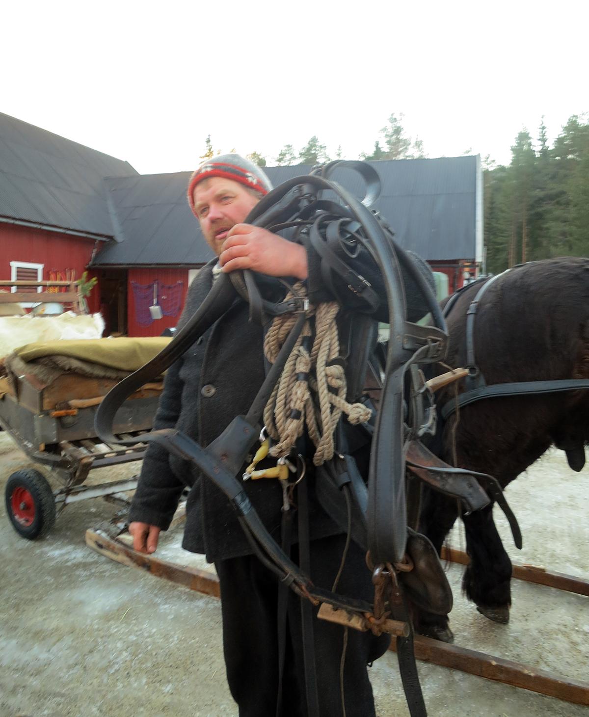 Da var Romedalsprins sæla av, og Truls bærer seletøyet på plass til neste dag. Foto: Karine Bogsti
