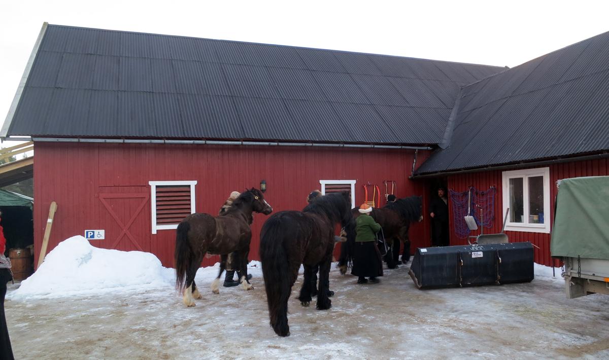 Ikke den lengste etappa på hestene denne dagen, men like fullt er det veldig godt for dem å hvile ei lang natt. Vi har tross alt vært på tur i seks dager nå, og starten var tøff for dem med dårlig føre. Foto: Karine Bogsti