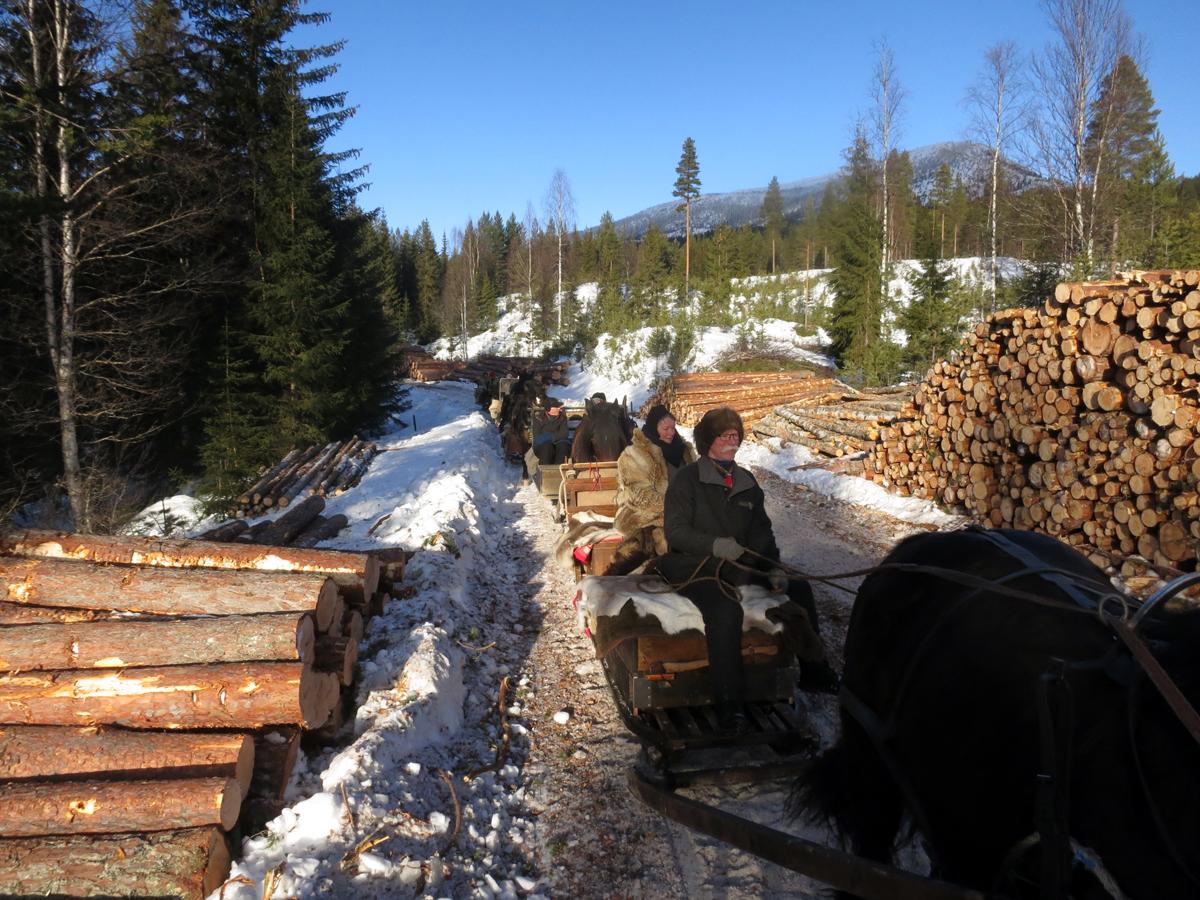 Her lukter det godt av tømmer. Tenk så mange tømmerlass hestene har dratt fram fra skogen opp gjennom tidene. Foto: Karine Bogsti