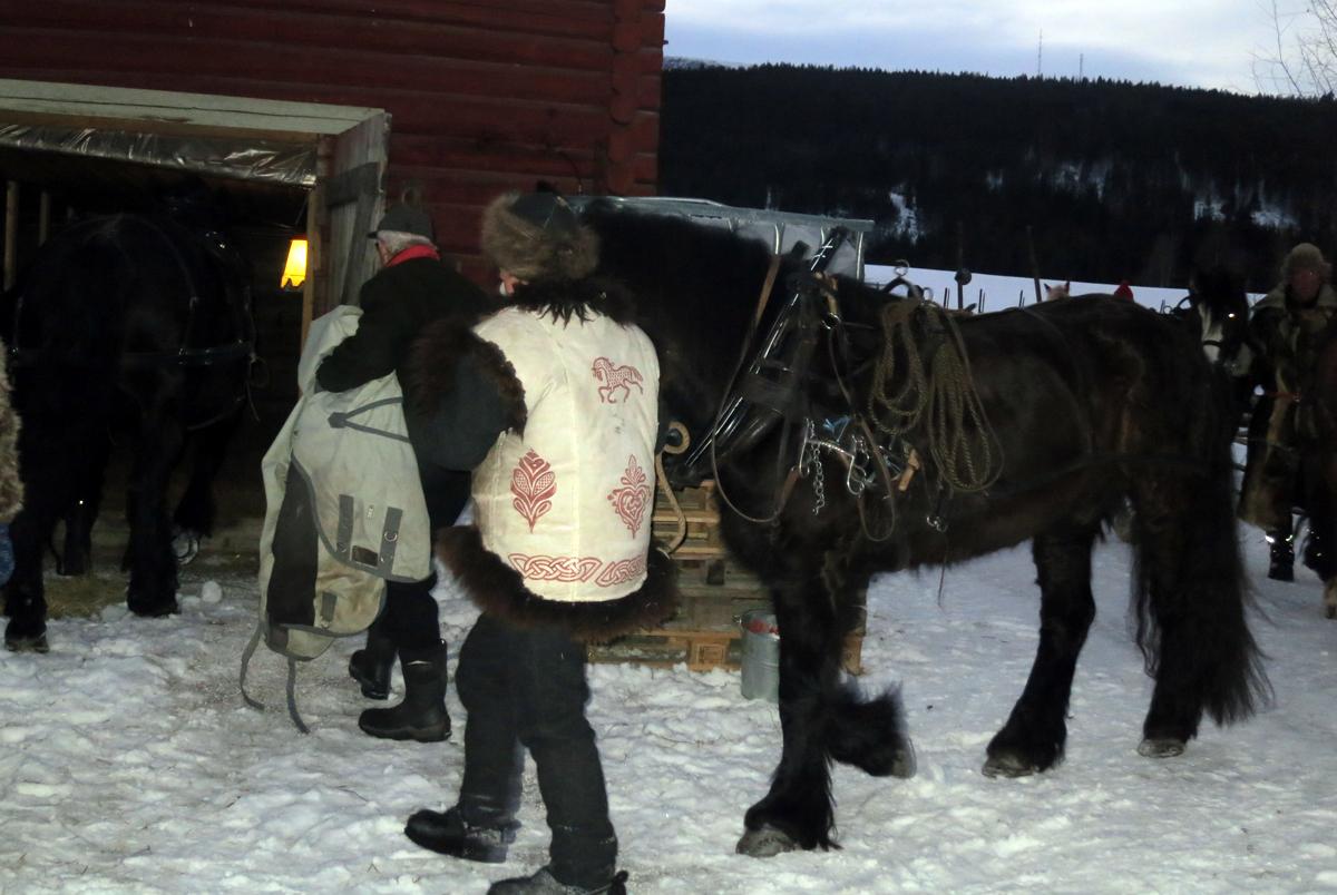 Hesta leies inn på stallen. Foto: Karine Bogsti