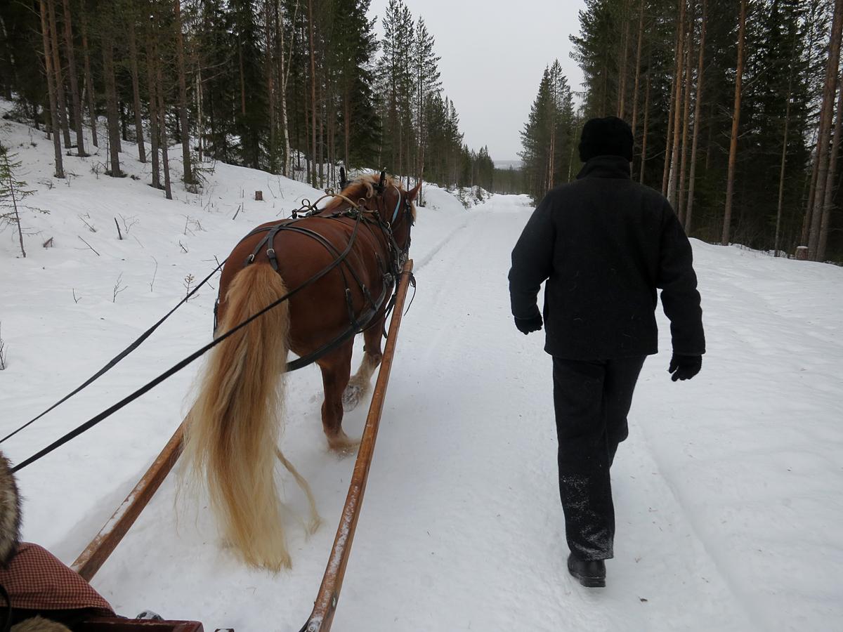 Ola har hoppet av sleden og går ved siden av for å spare hesten for litt vekt på lasset. Foto: Karine Bogsti