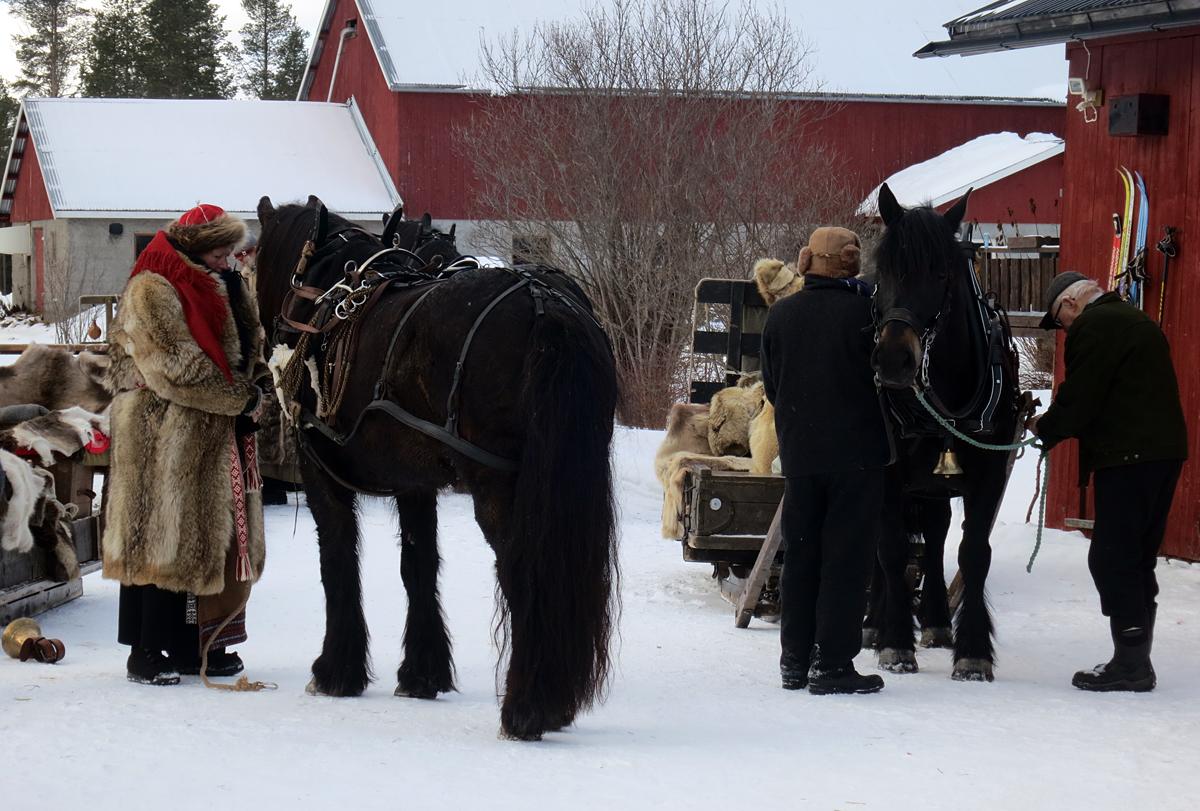 Hesta har fått høy, vatn og kraftfor og en drøy times pause i langkvilen. Her skal vi igang igjen. Foto: Karine Bogsti