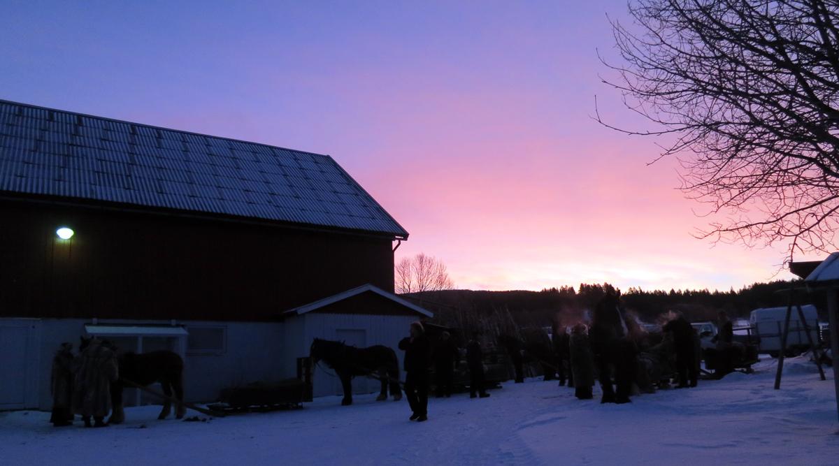 Fint morgenlys over stallen på Os. Tusen takk for lån av stallplass, Ivar Røste! Foto: Karine Bogsti