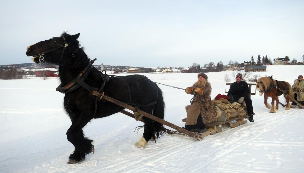 Hesten Guri gjør seg klar til å ta bakken i fart. Foto: Karine Bogsti