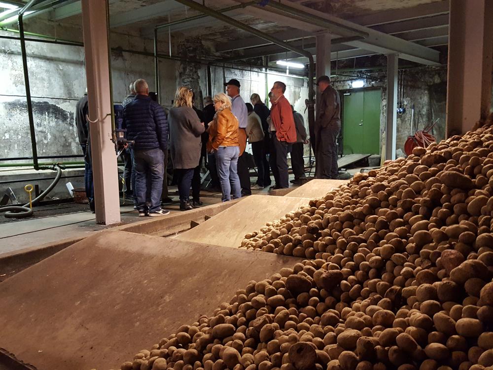 Poteter på veg til vasking i produksjonen på brenneriet. Foto: Karine Bogsti