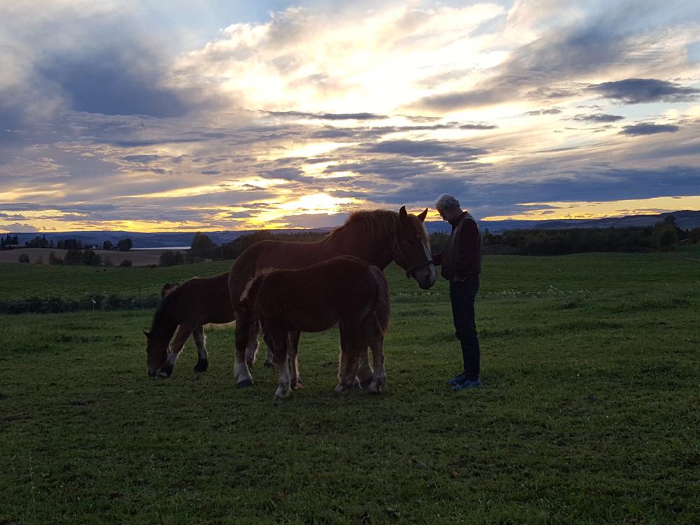 Lasskjører hilser på hestene på Fokhol. Foto: Karine Bogsti
