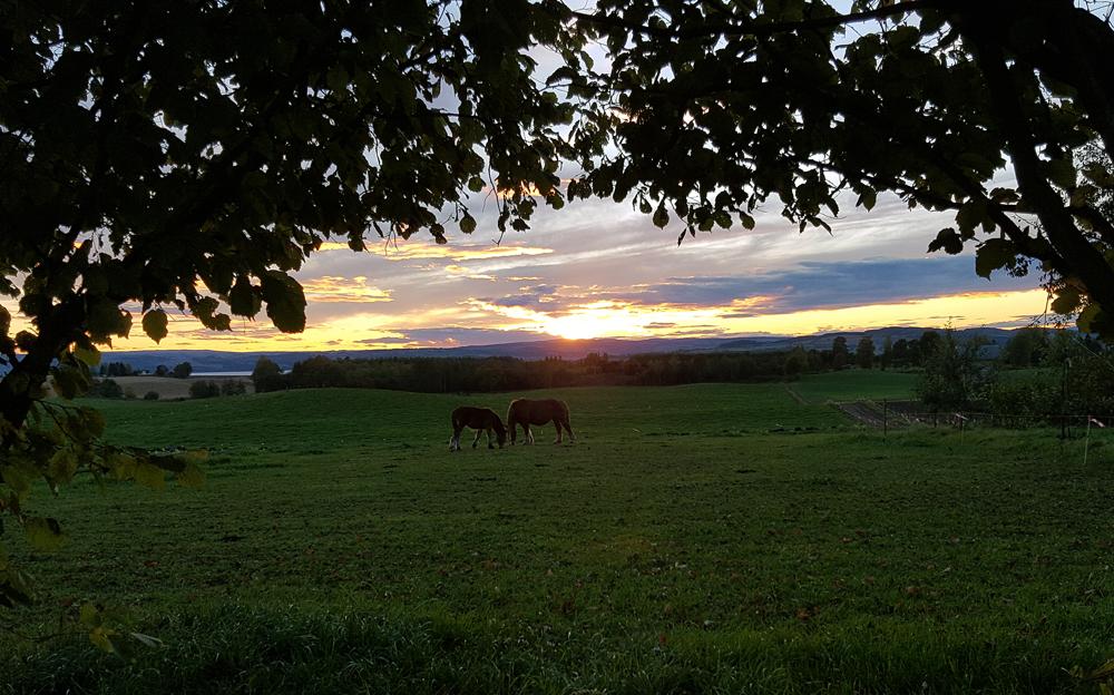 Hest i solnedgang. Foto: Karine Bogsti