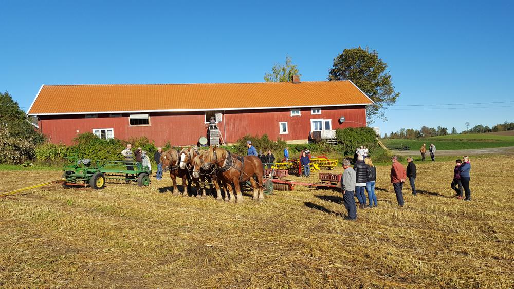Myrseth hadde satt fram forskjellig type redskap han bruker med hest på garden, og forklarte og demonstrerte. Foto: Karine Bogsti