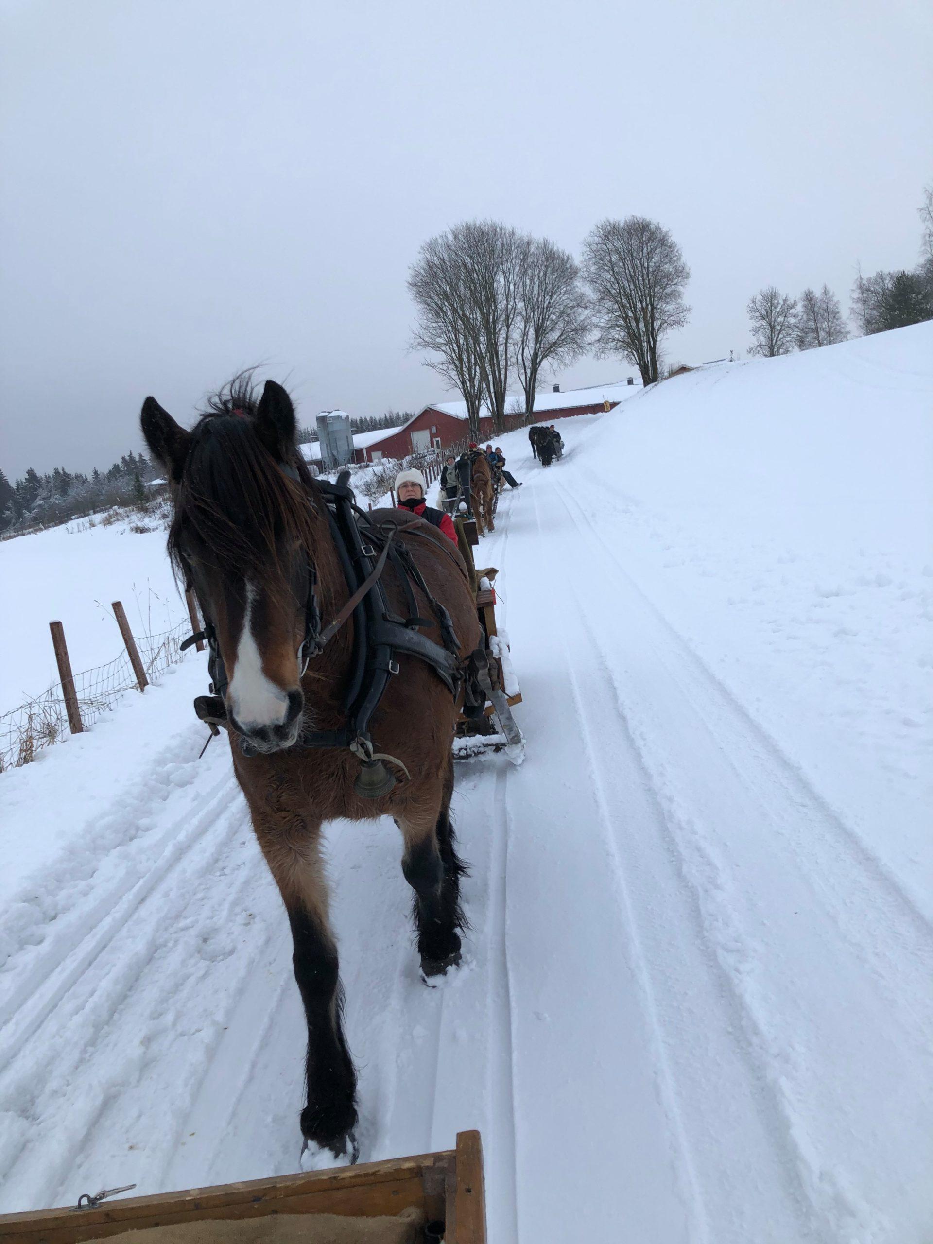 Knall sledeføre i Løten den 15. desember på høstens tredje felles treningstur. Foto: Torun Jensen